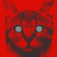Clitcat